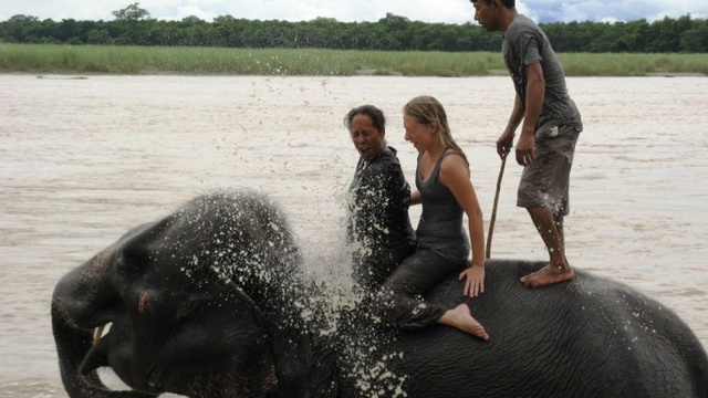 Elephant Bath In Chitwan National Park